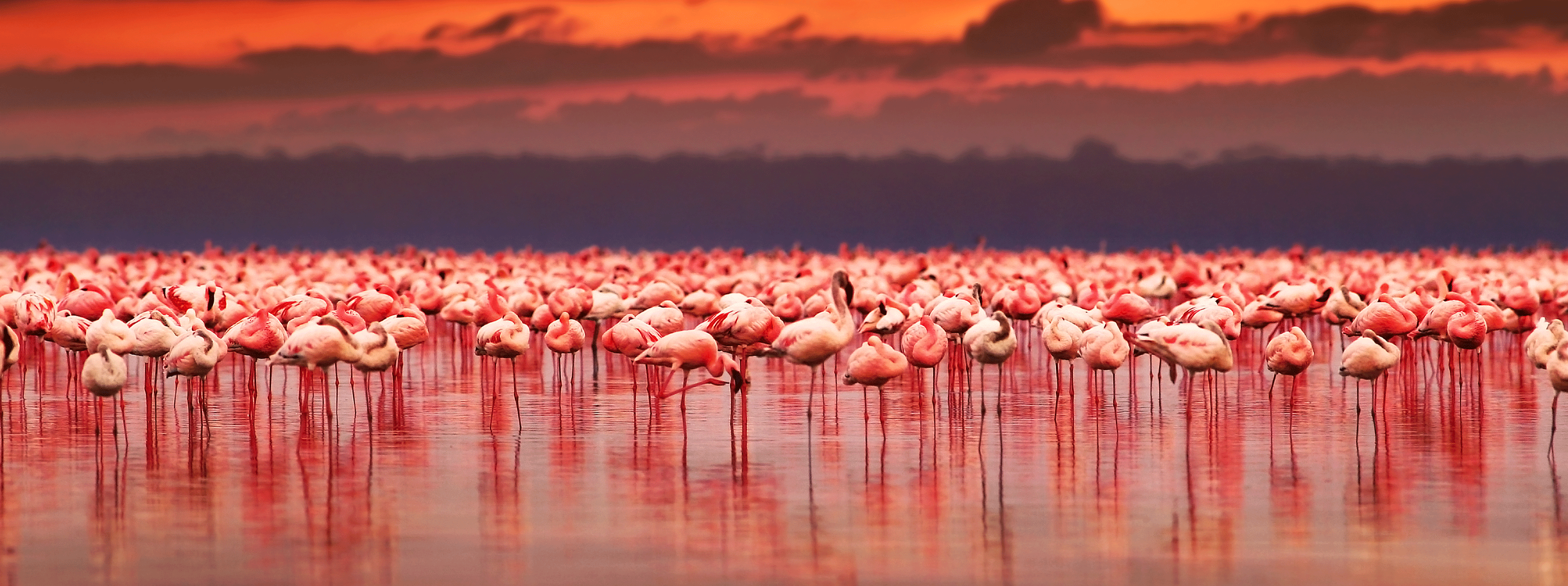 /resource/Images/Tanzania_Kenya/headerimage/African-flamingos-in-the-lake.png