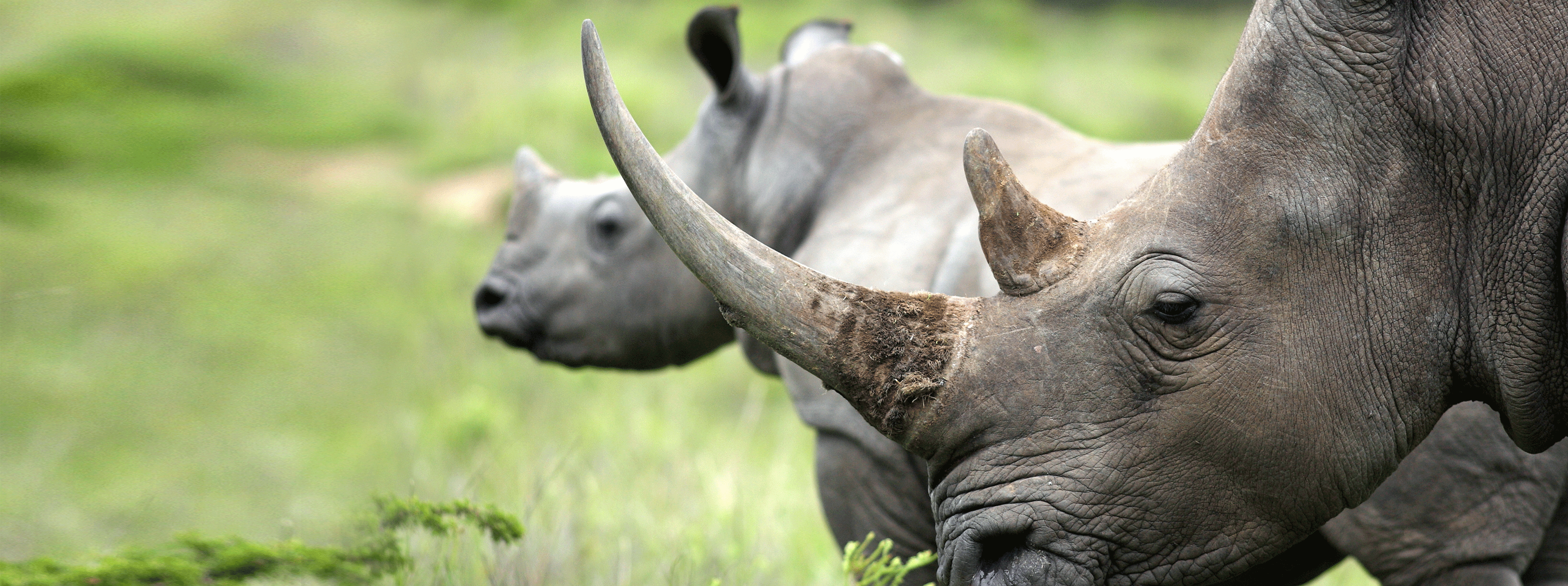 /resource/Images/Tanzania_Kenya/headerimage/rhinos.png