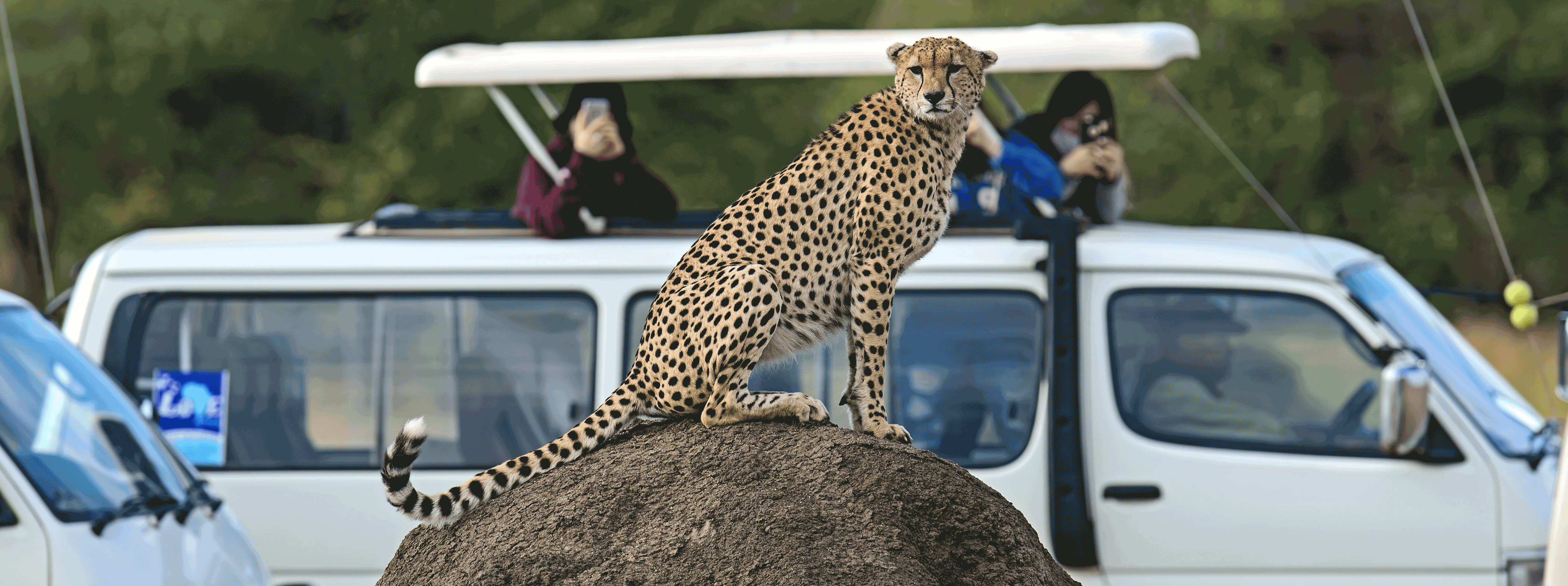/resource/Images/africa/kenya/headerimage/Family-Cheetah-Masai-Mara-National-Park-in-Kenya1.png