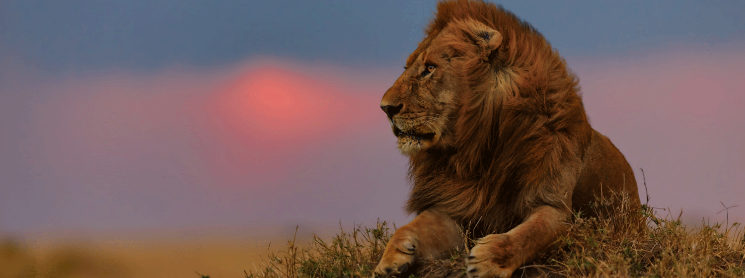 /resource/Images/africa/kenya/headerimage/Masai-Mara1.png