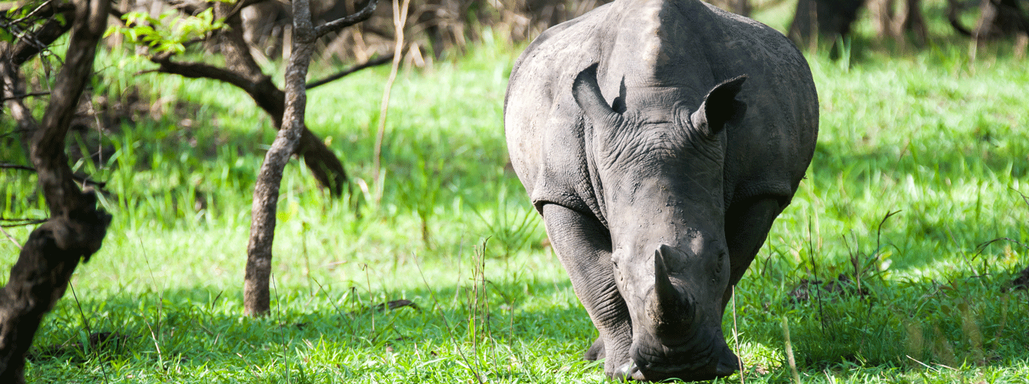 /resource/Images/africa/uganda/headerimage/Ziwa-Rhino-Sanctuary.png